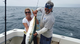 Yellowtail Not Tuna Fish image