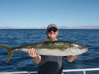 Yellowtail Fish Pic