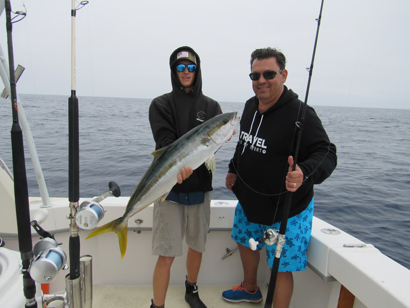 Yellowtail Jack not Tuna Fish - Yellowtail Fishing Tips, How to