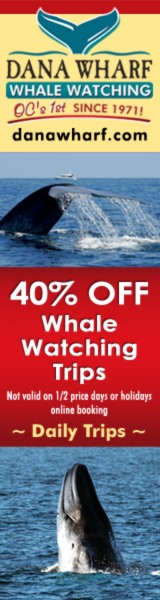 Boston whale watching discount coupons