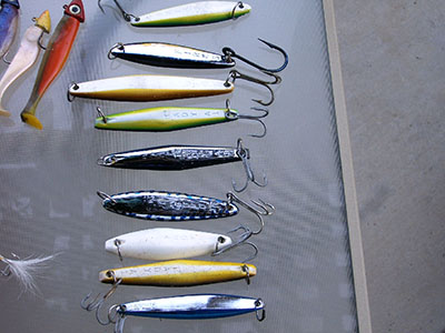 yellowtail fish tips - yellowtail fishing - how to catch, Fishing Bait
